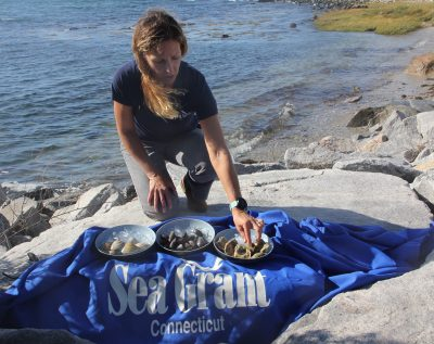 Tessa Getchis shows samples of three species of shellfish found in Long Island Sound, clams, mussels and oysters.