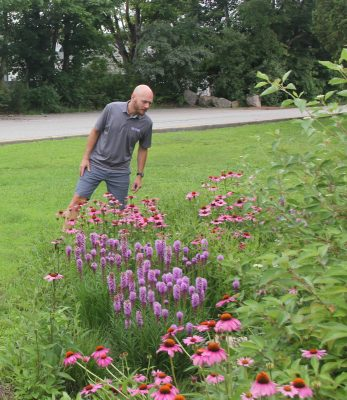 David Dickson spots a skipper butterfly and several bees pollinating on the flowers in the rain garden at East Lyme High School on July 12.