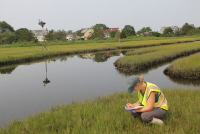 Sarah Crosby, director of Harbor Watch at Earth Place, collects data on grasses at a salt marsh in Groton in July as part of Connecticut Sea Grant-funded research project.
