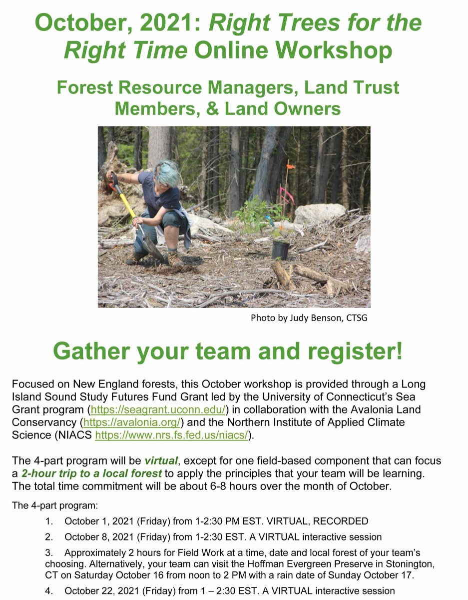 """""""Right Trees for the Right Time"""" workshop flier"""