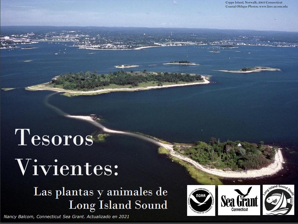 Tesoros Vivientes title slide